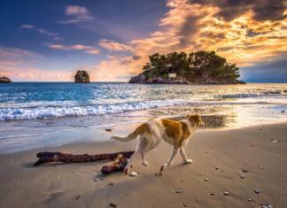 Wczasy z psem nad morzem